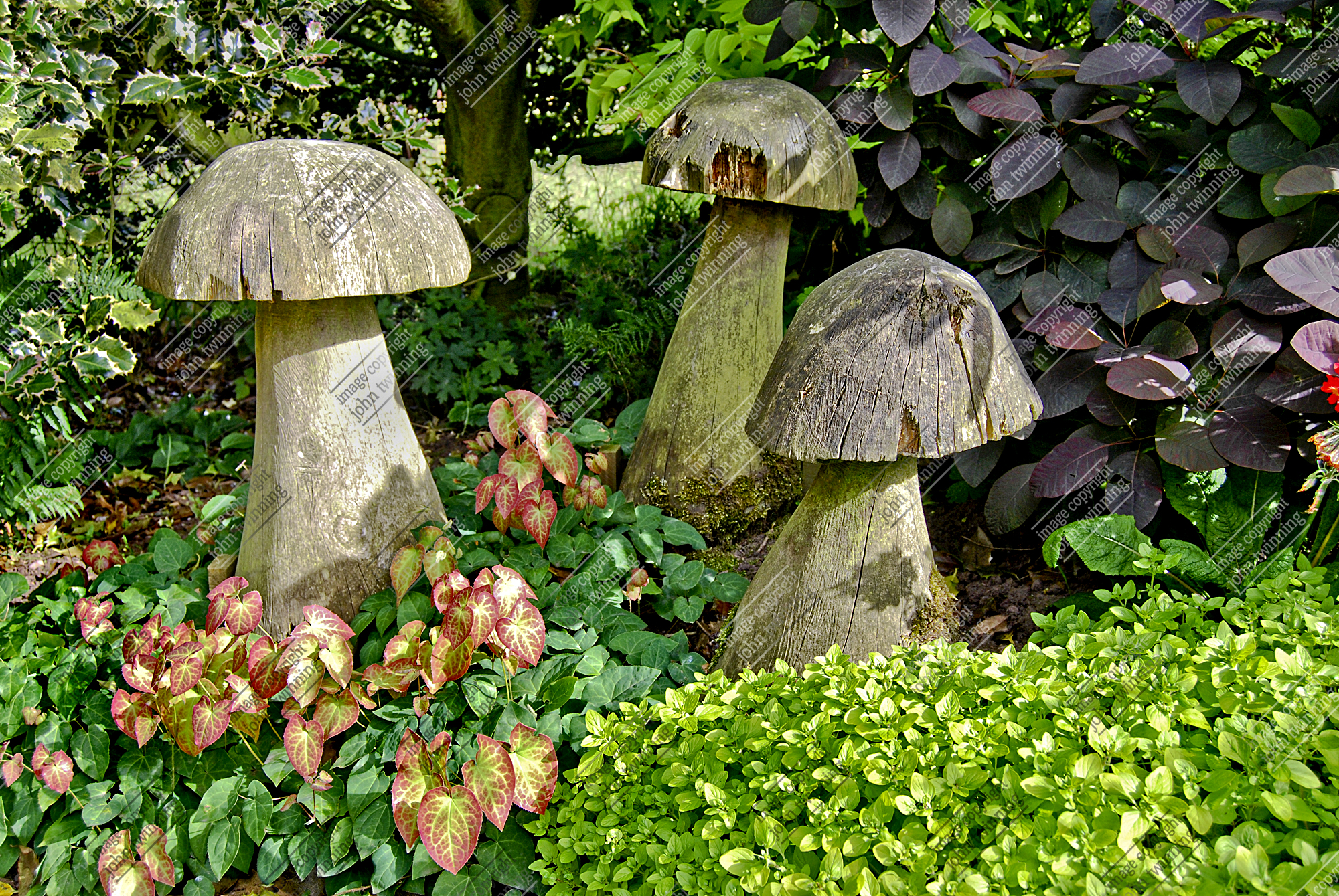 Mushroom Mystery (photograph)