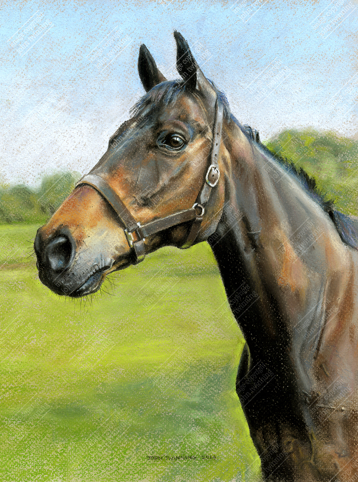 Reapy, bay equestrian portrait