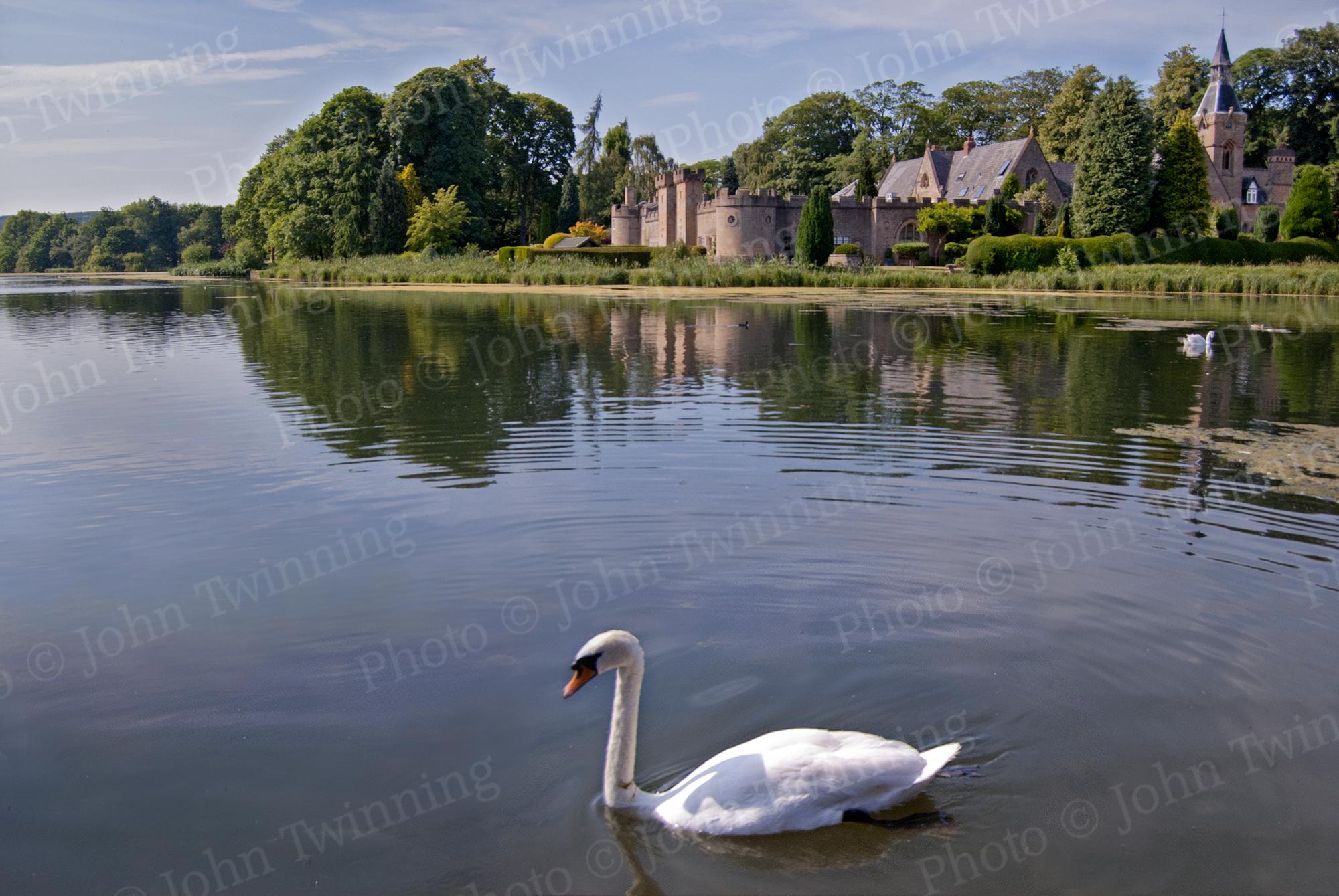 """""""Swan Lake"""" [photo]"""